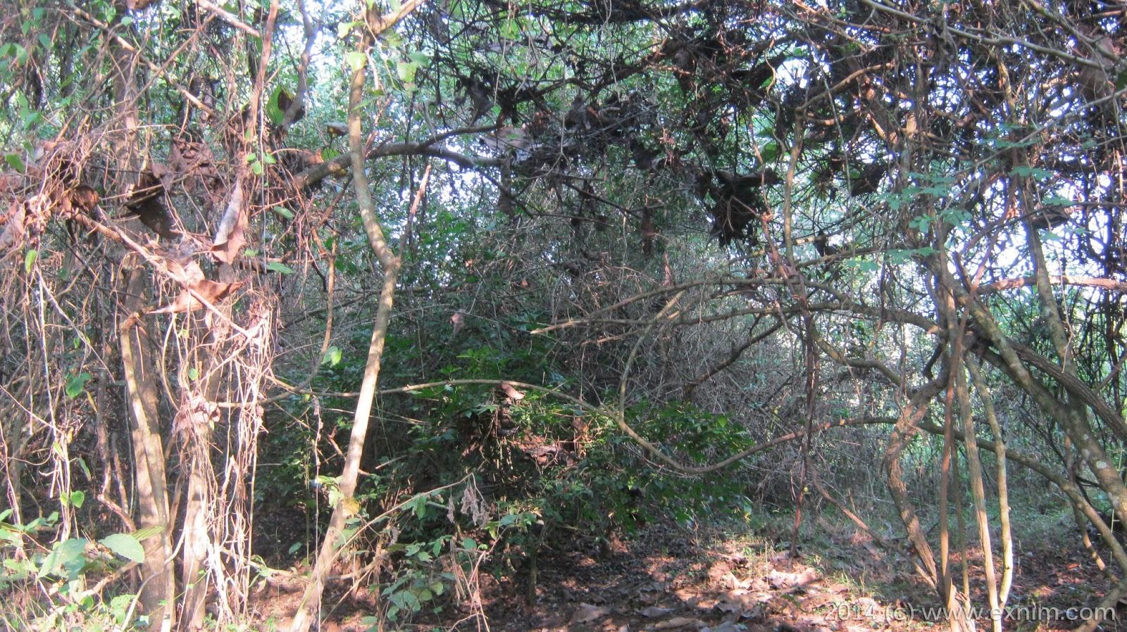 Kondisi lokasi hutan untuk berburu berbagai jenis binatang