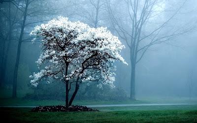 Foto Pohon Indah