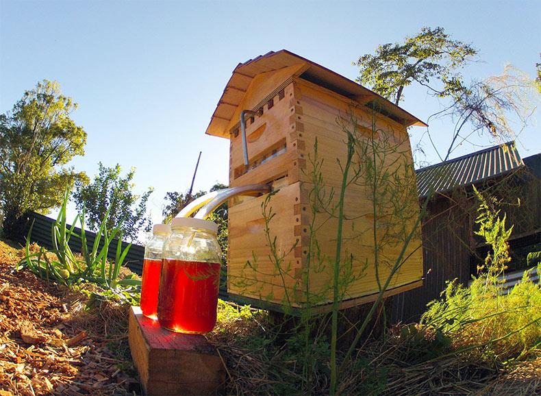Miel al Instante: Nueva colmena que extrae automáticamente la miel sin perturbar a las abejas