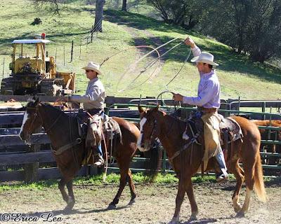 cowboys, ranchers, roping