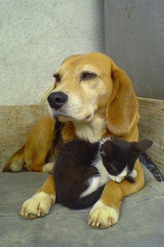 5 Dogs That Secretly Love Cats