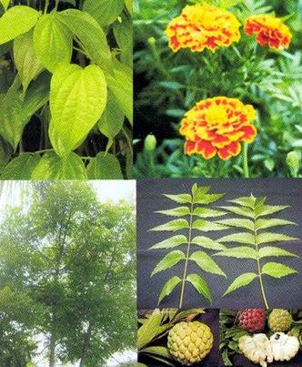 Cara Membuat Pestisida Nabati Sendiri | Ragam Budidaya -Perlindungan ...