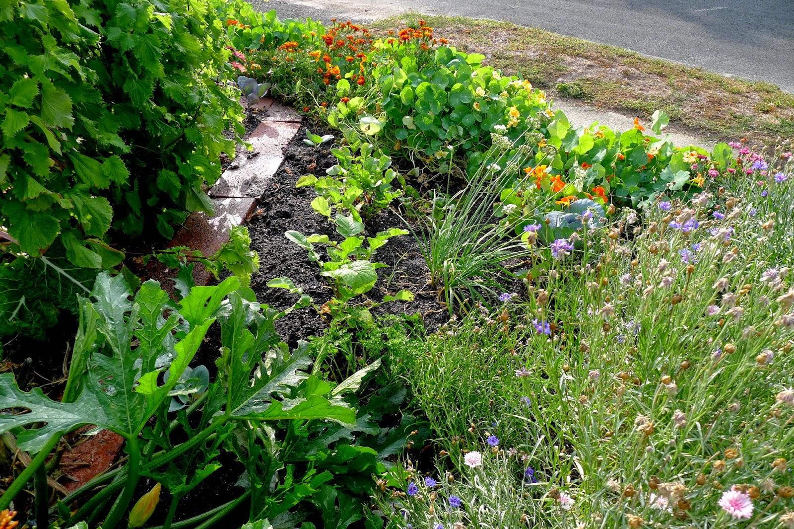 Edible landscaping, transitioning in to fall, urban farming, gardening