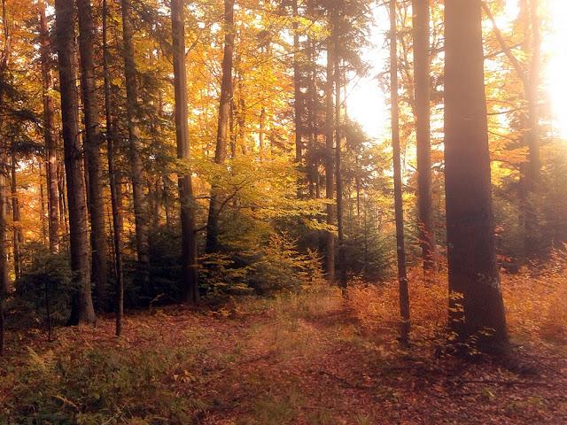 las jesienią