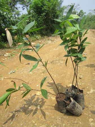 Mt. Balagbag Rodriguez Rizal, montalban mountain, mt balagbag montalban, mt balagbag tree planting