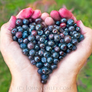 'Huckleberry Heart' (c) John Ashley