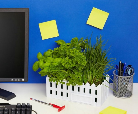 Blew Desktop Herb Garden