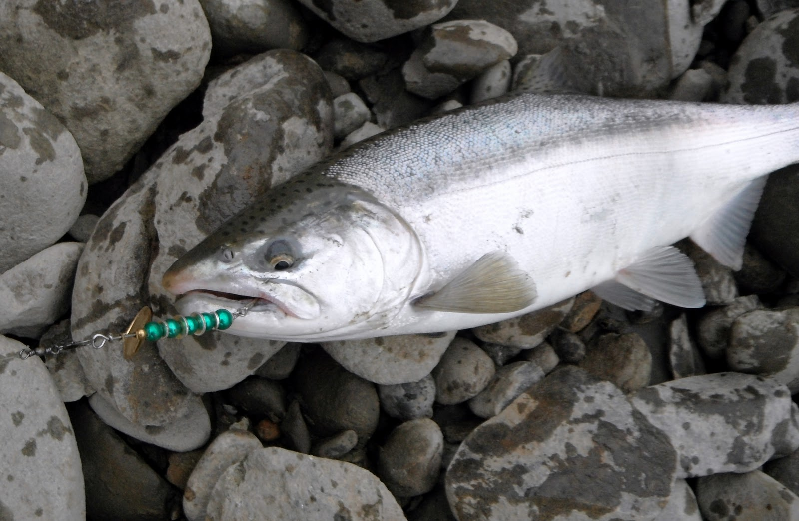 Information about fishing spinners for your next outdoor for Salmon fishing washington rivers