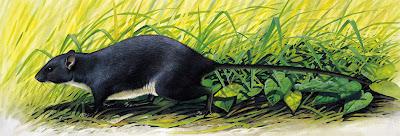 extinct island mammals