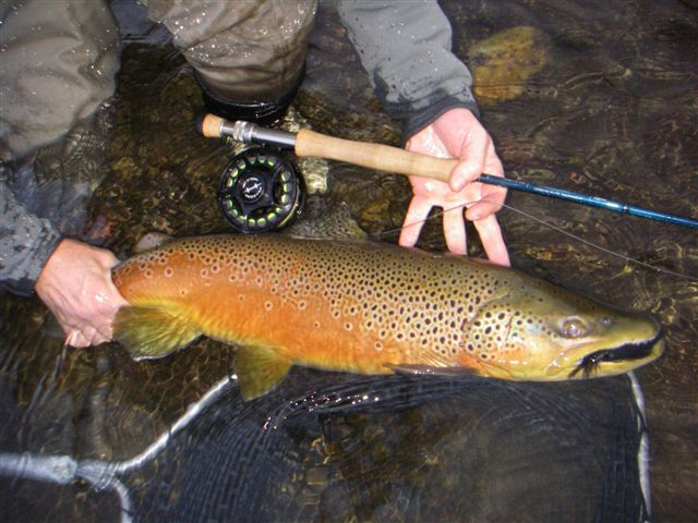 Utah fly fishing tips and photos guide services for Trout fishing utah