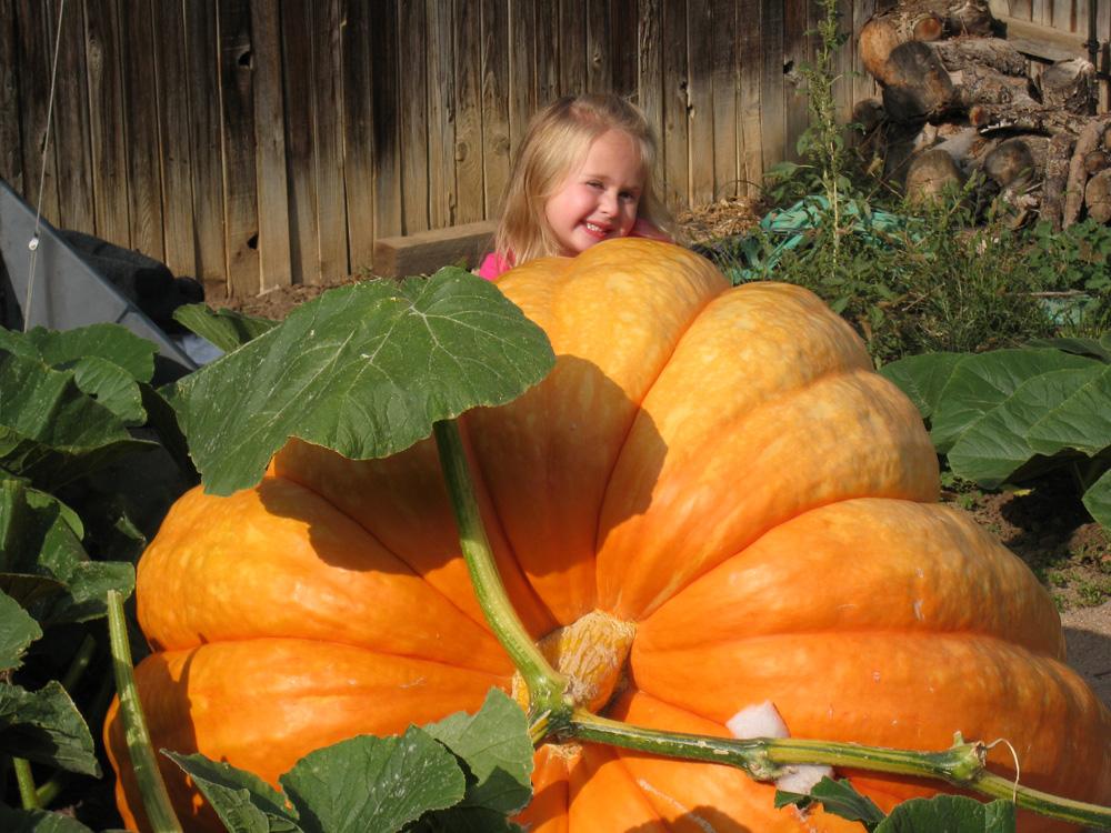 pumpkin growing sequence worksheet