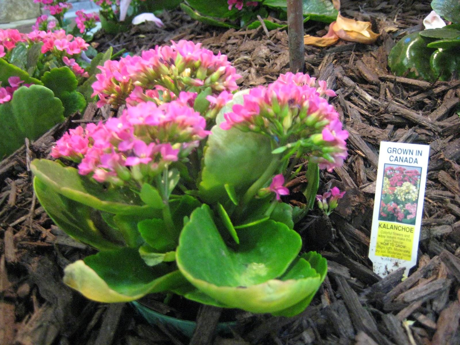 The parkland project 2012 realtors home and garden show - Flowering succulent house plants ...