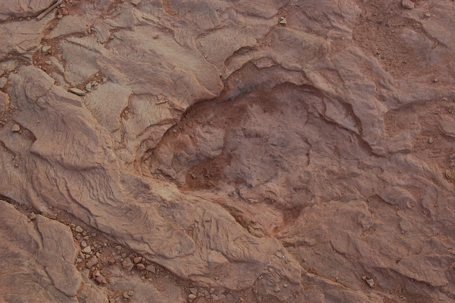 Close Up of a Large Fossilized Dinosaur Footprint Near Moab Utah