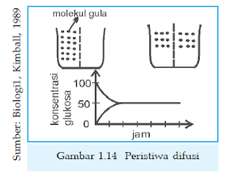 macam-macam jenis transpor pada sel