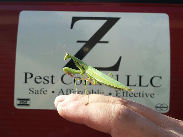z pest control, walla walla, praying mantis, extermination