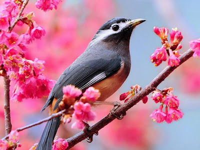 Beautiful Bird on branch wallpaper