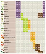 Tabla de verduras
