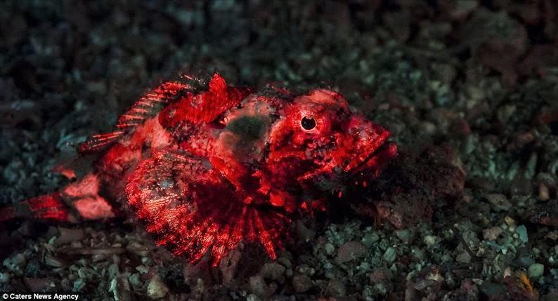 Câmera captura vida marinha em cores impressionantes