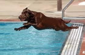 cães em piscinas