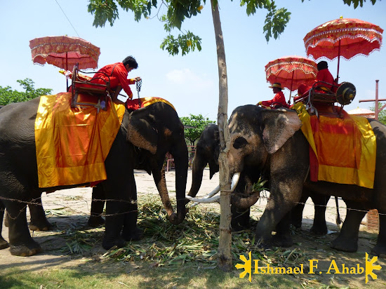 A herd of Thai elephants in Ayutthaya Historical Park