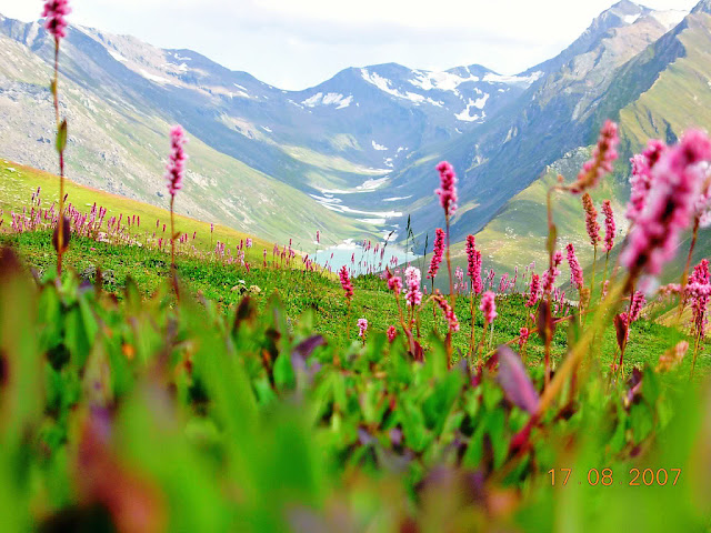 The Simple Beauty Of Nature: Neelum Valley AJK Alpine Flowers Saral Lake