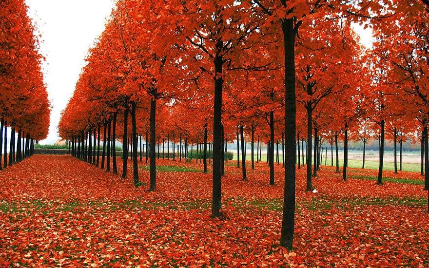 تحكي جمال وروعة الخريف autumn4.jpg