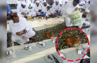 Kucing Ini Bersabar Menunggu Buka Puasa Di Masjidil Haram