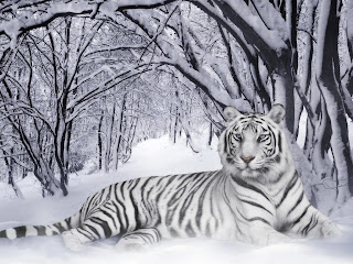 White Tiger Wallpapers - Beautiful Tiger Desktop Wallpapers