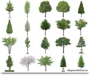Los arboles for Plantas forestales