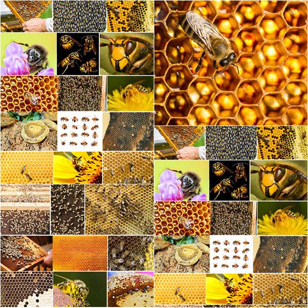 ستوكات نحل وبيوت النحل بجودة عالية 2015