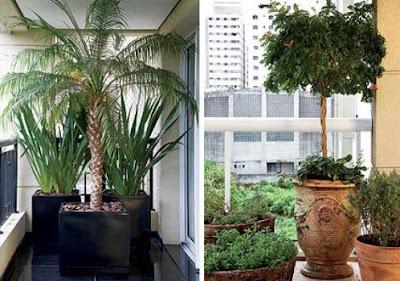 Fotos de Vasos de Plantas para Decoração