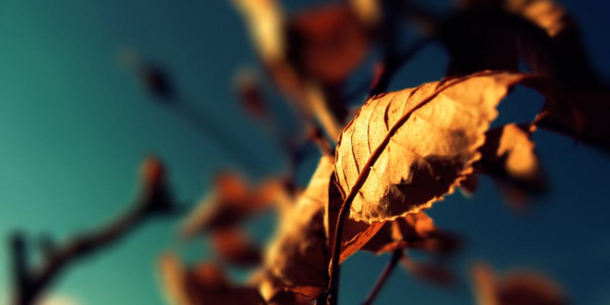 Leaf1 300+ Muhteşem HD Twitter Kapak Fotoğrafları