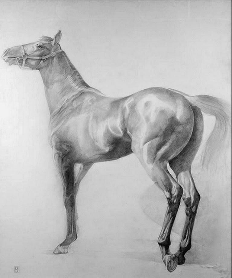 fotos-de-dibujos-de-caballos-hechos-con-carboncillo