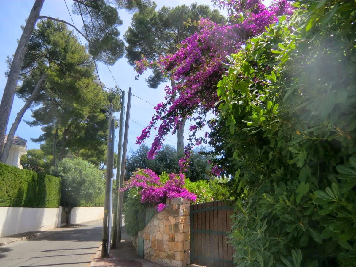 Avenue de la Tour Gandolphe
