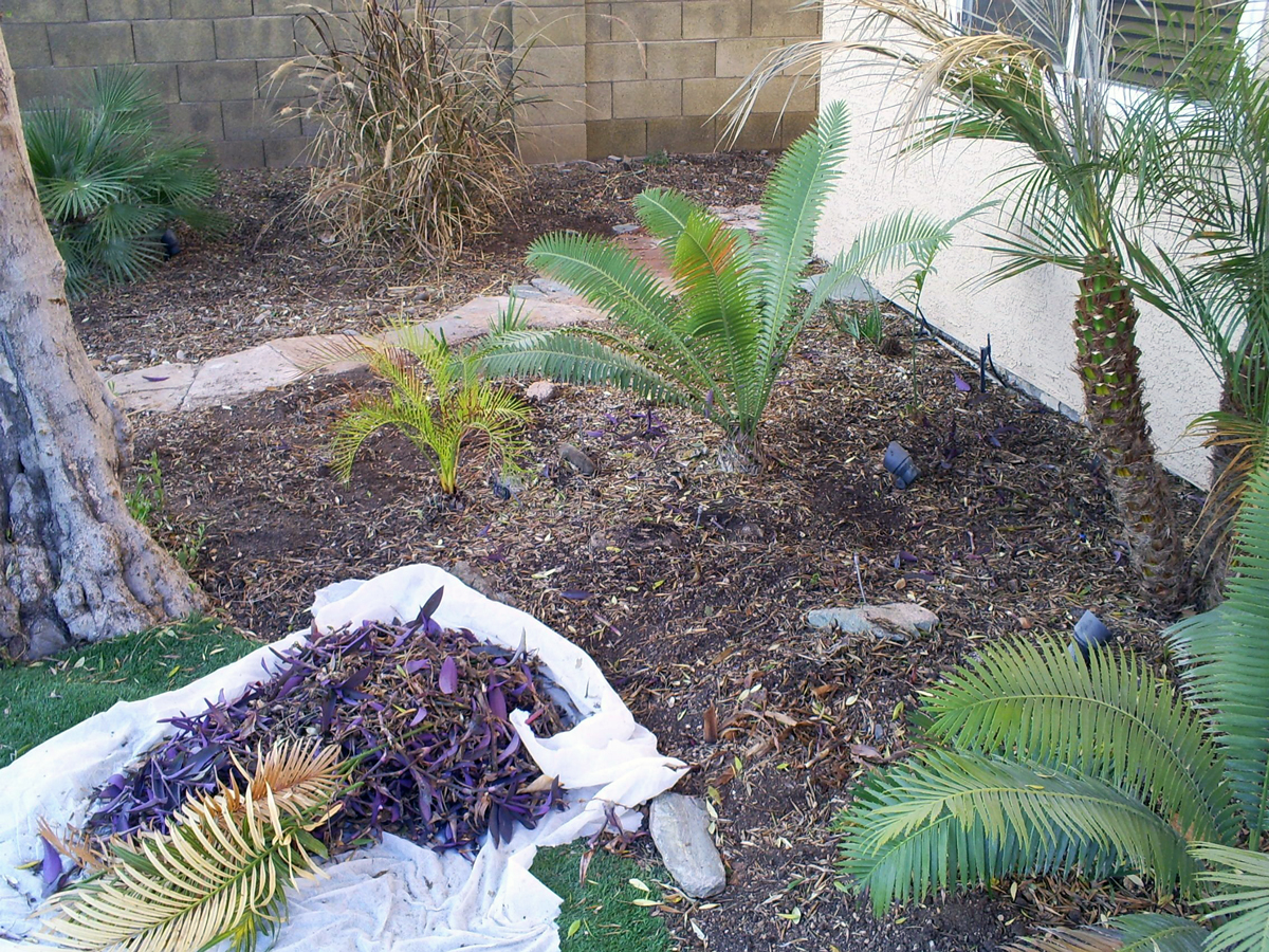 Brad 39 S Tropical Paradise Caring For Low Maintenance Areas