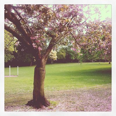 silent sunday, blossom, spring, park in spring