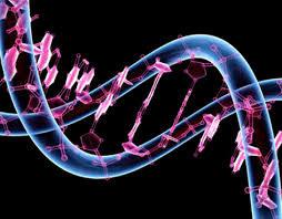 perder peso com programa baseado na genética