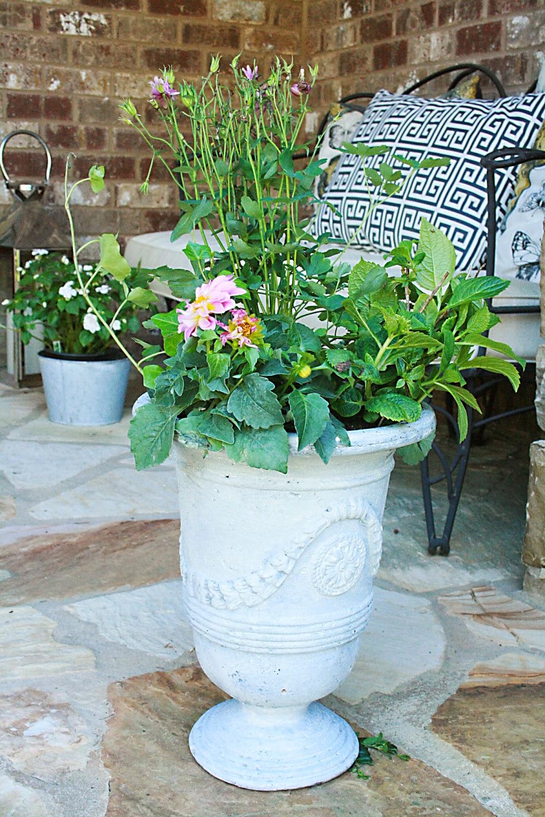 gardening, planting, pots, flowers