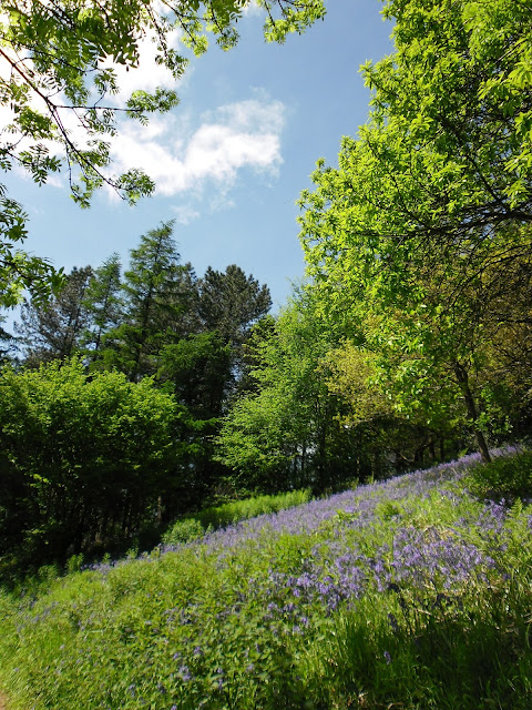 Clent Hills photography - Woodland