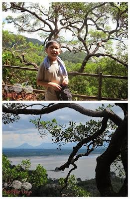 Lintang Trail @ Bako NP - WireBliss
