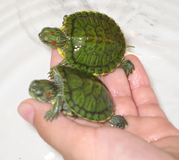 Most Popular Best Pets In The World - Turtles