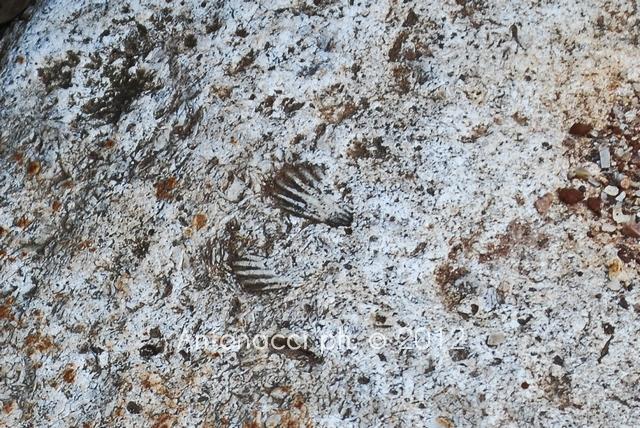 fossili-gargano