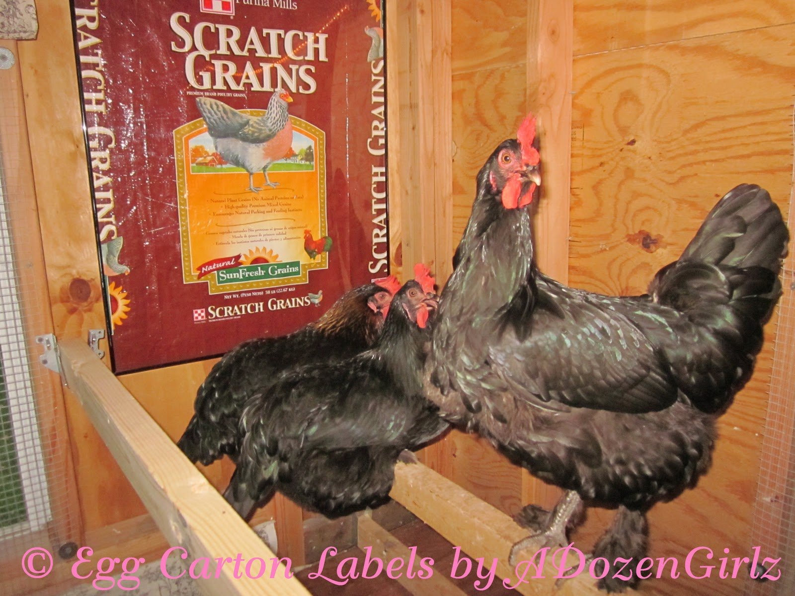 Chicken Feed Sack Tote Bags - I even created art for my chicken coop by placing the front half of a