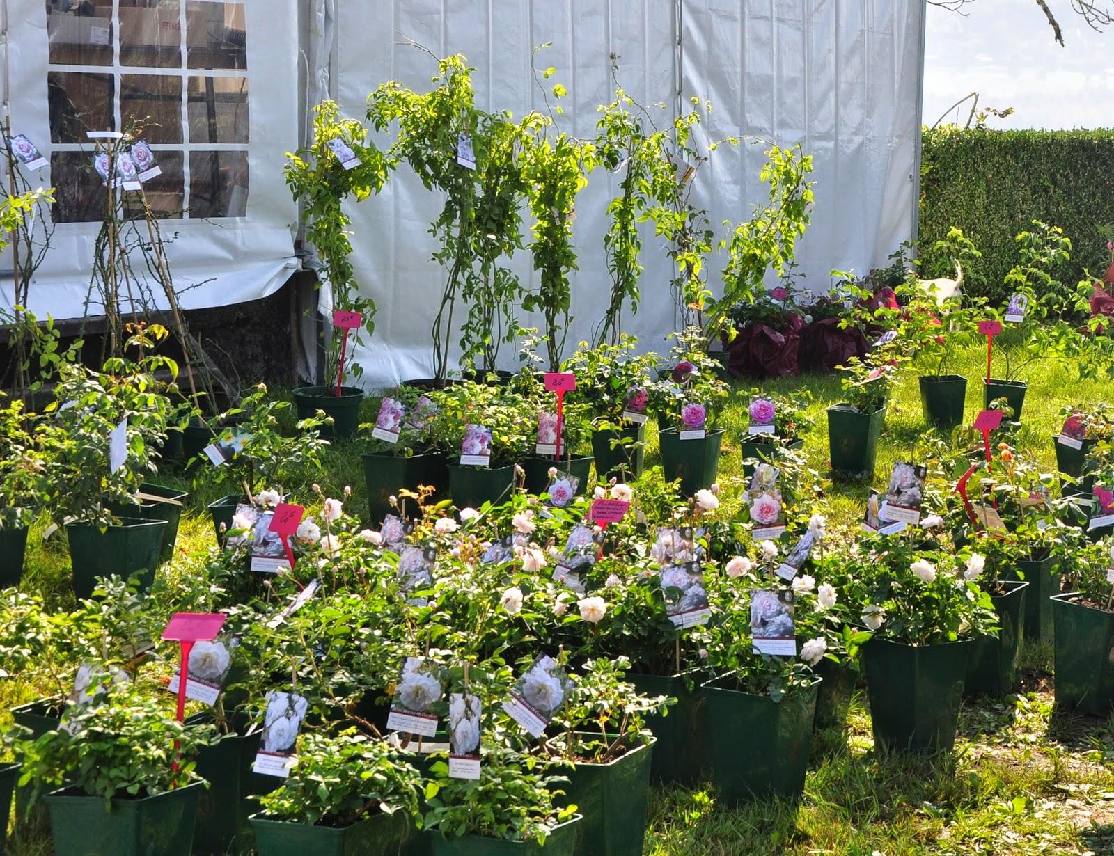 le jardin du bois joli foire aux plantes au lac d 39 aiguebelette. Black Bedroom Furniture Sets. Home Design Ideas