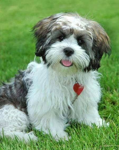 Top 5 Longest Living Dog Breeds