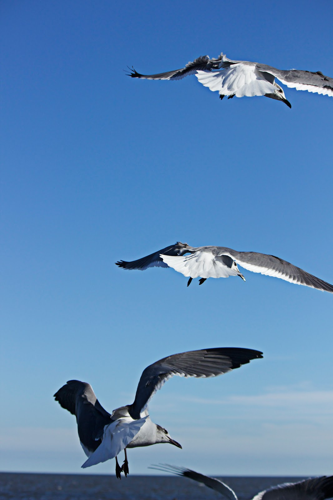 seagulls flying above