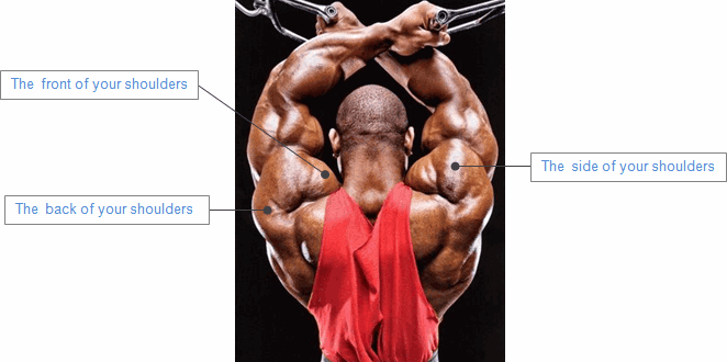 The key associated with Develop Neck Muscle tissue