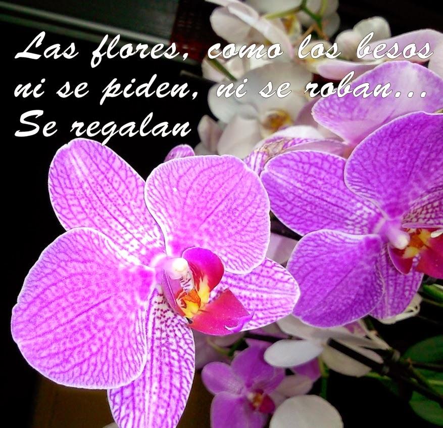 Imagenes De Ramos De Flores Con Frases D Amor