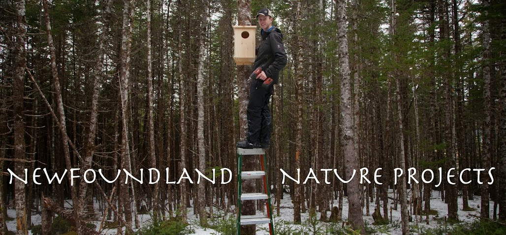 Newfoundland Nature Projects