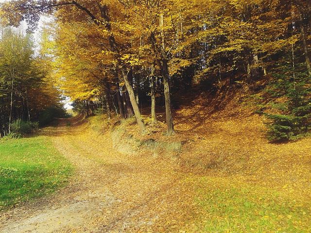ścieżki w lesie